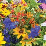 David's Garden Seeds Wildflower Butterfly Hummingbird Mix